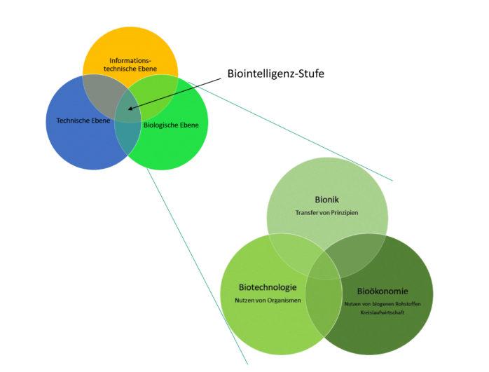 Stufen der Biointelligenz