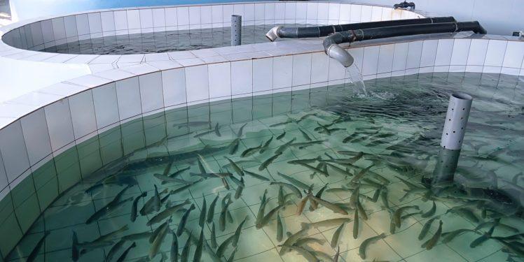Fischzucht_Kriem